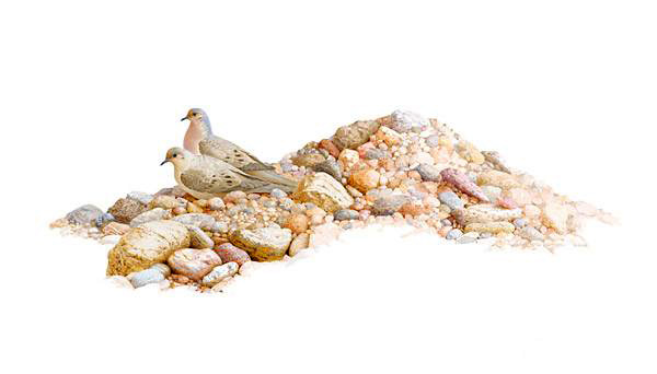 """Rockpile Doves"" ( click to enlarge )"